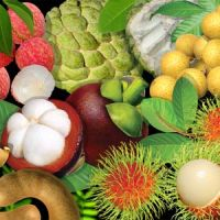 fresh-tropical-fruits